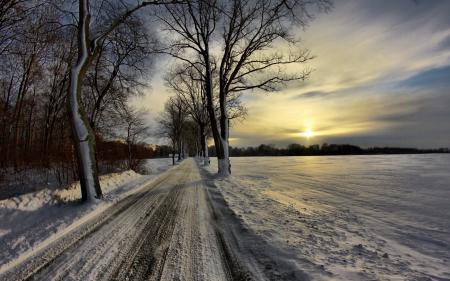Обои дорога, солнце, деревья, природа
