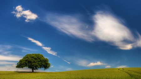 Обои пейзажи, природа, поле, поля