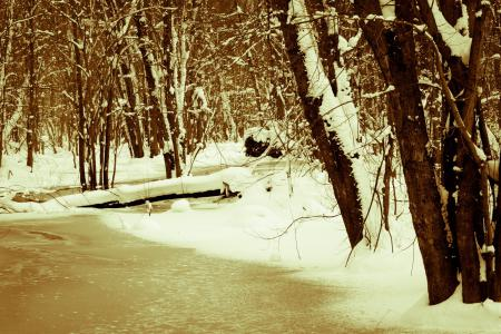Фотографии зима, снег, пейзаж