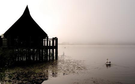 Фото озеро, лебеди, природа, пейзаж