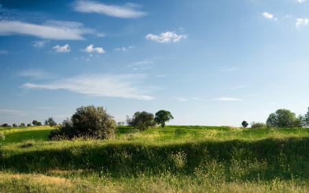 Заставки поле, луг, поляна, растения