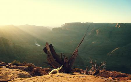 Фото каньон, пустыня, река, дерево