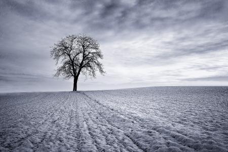 Обои небо, поле, снег, дерево