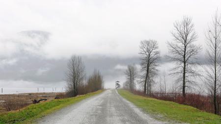Картинки пейзаж, природа, дорога, деревья