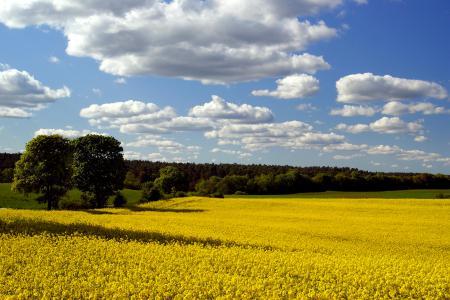Обои весна, поле, рапс, небо