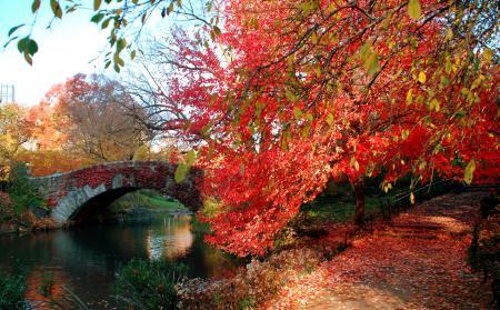 Фотографии Город, парк, листья, деревья