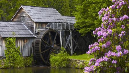 Фото водяная мельница, рододендроны, куст