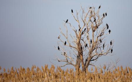 Картинки птицы, дерево, трава, небо