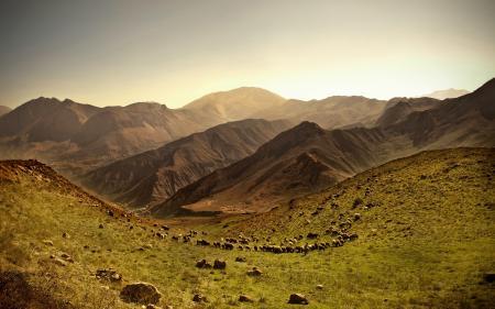Фото горы, караван, поле, трава