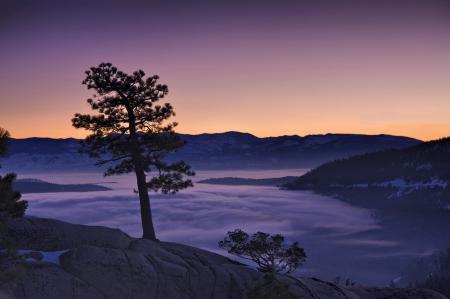 Фотографии сосна, горы, туман, утро