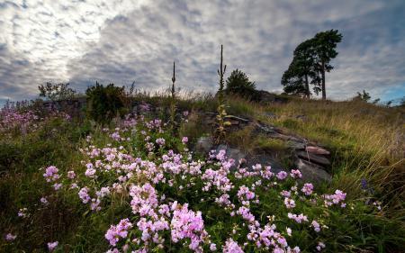 Фотографии поле, цветы, небо, природа