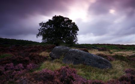 Картинки ночь, поле, дерево, камень