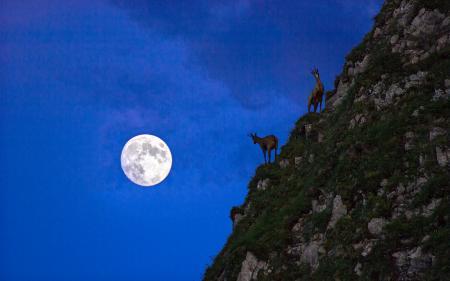Заставки луна, ночь, животные, гора