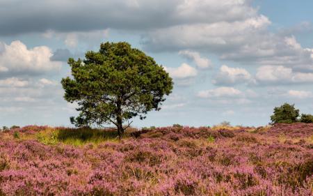Картинки поле, дерево, пейзаж