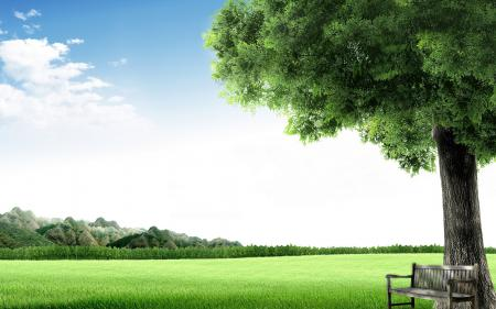 Фотографии скамейка, дерево, небо, трава