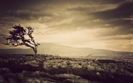 Фотографии ночь, дерево, камни, пейзаж