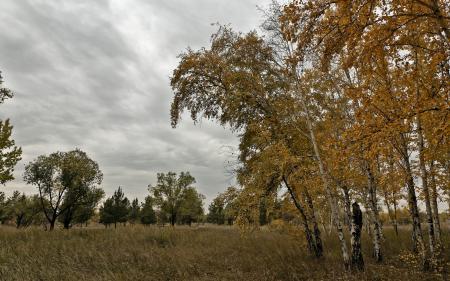 Фото осень, природа, деревья, пейзаж