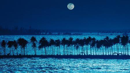 Фотографии ночь, море, пальмы, пляж