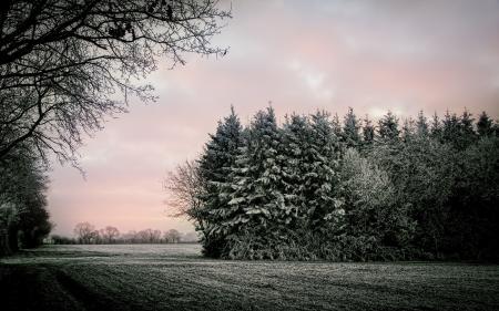 Фотографии поле, деревья, пейзаж