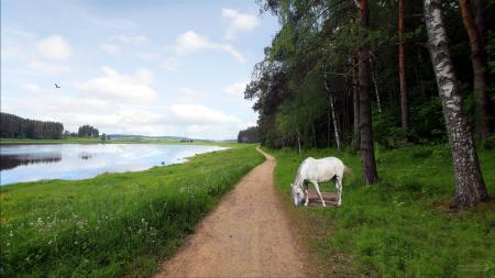 Обои река, дорога, конь, пейзаж