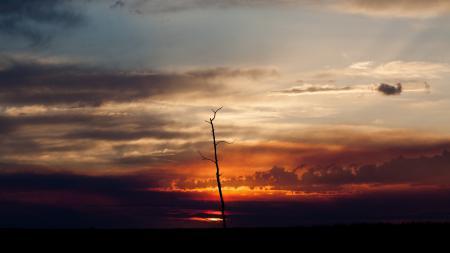Фото небо, ночь, дерево, пейзаж