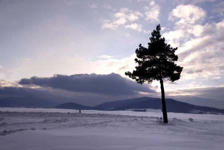Картинки зима, снег, дерево