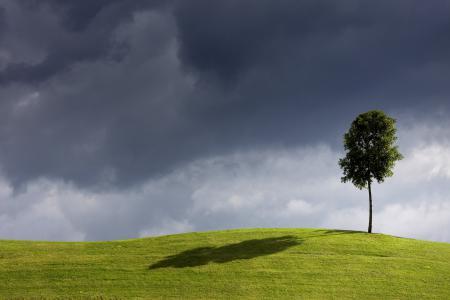 Заставки дерево, ветер, небо, поле