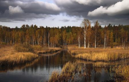 Обои осень, лес, озеро, пейзаж