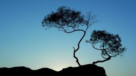 Заставки дерево, небо, силуэт, Китай