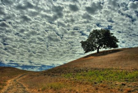Фото природа, холм, дерево, небо