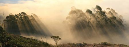 Картинки лес, туман, лучи, тени