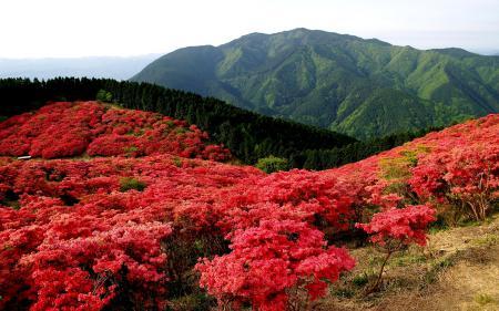 Картинки природа, поле, цветы, цветут