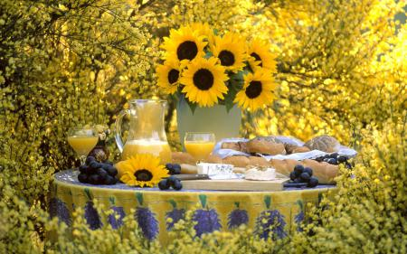 Фото цветы, подсолнухи, желтый, виноград