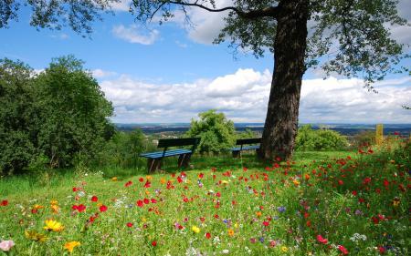 Фото лето, скамя, цветы
