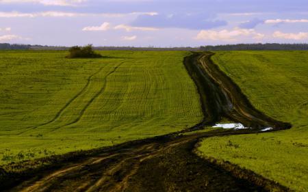 Обои поле, дорога, небо