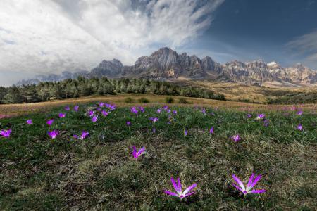 Фото горы, поля, цветы, небо