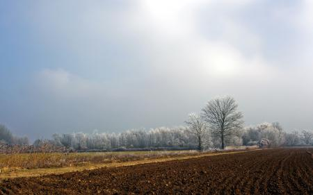 Фотографии поле, пашня, деревья, пейзаж