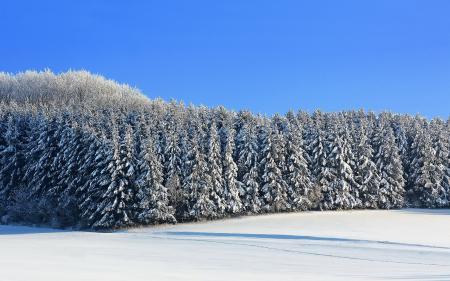 Обои зима, ели, поле, снег
