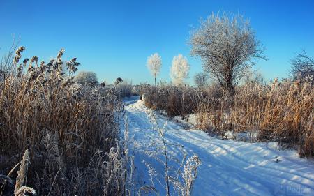 Фото зима, снег, камыш, природа