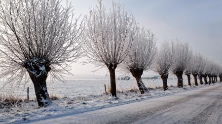 Картинки зима, дорога, деревья, пейзаж