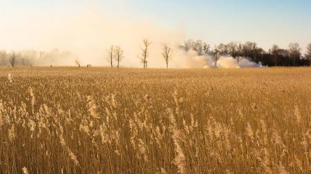 Картинки поле, трава, дым, природа