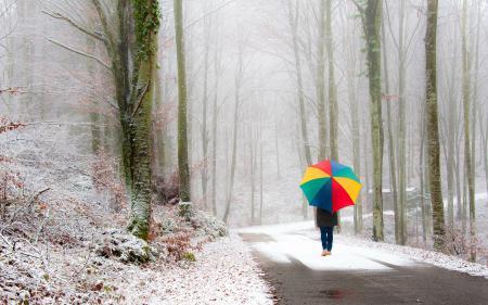 Заставки дорога, деревья, прогулка, дорога