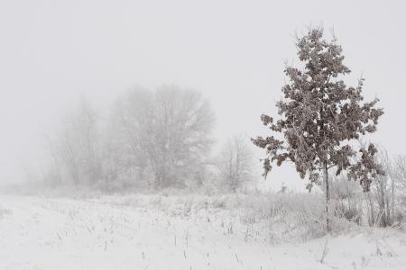 Обои зима, туман, снег, дерево