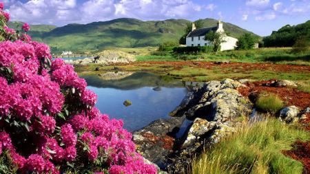 Картинки Пейзаж, цветы, дом, холмы