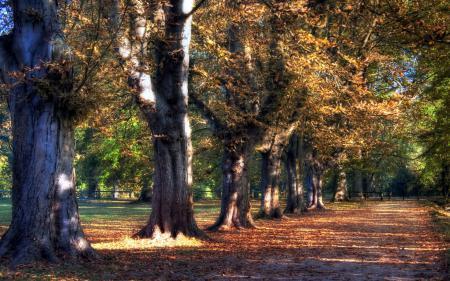 Обои парк, дорога, деревья