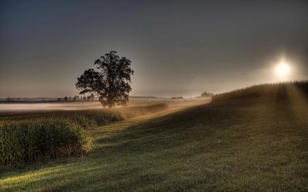 Обои поле, дерево, закат, природа