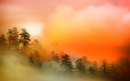 Обои туман, цвет, природа, пейзаж