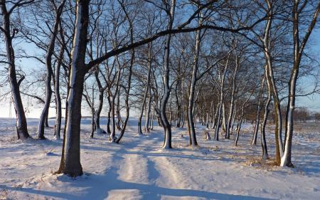 Фото зима, снег, деревья
