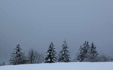 Картинки зима, ёлки, природа, пейзаж