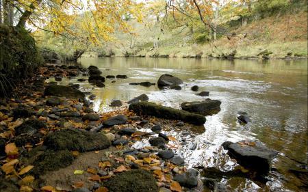 Картинки река, берег, природа